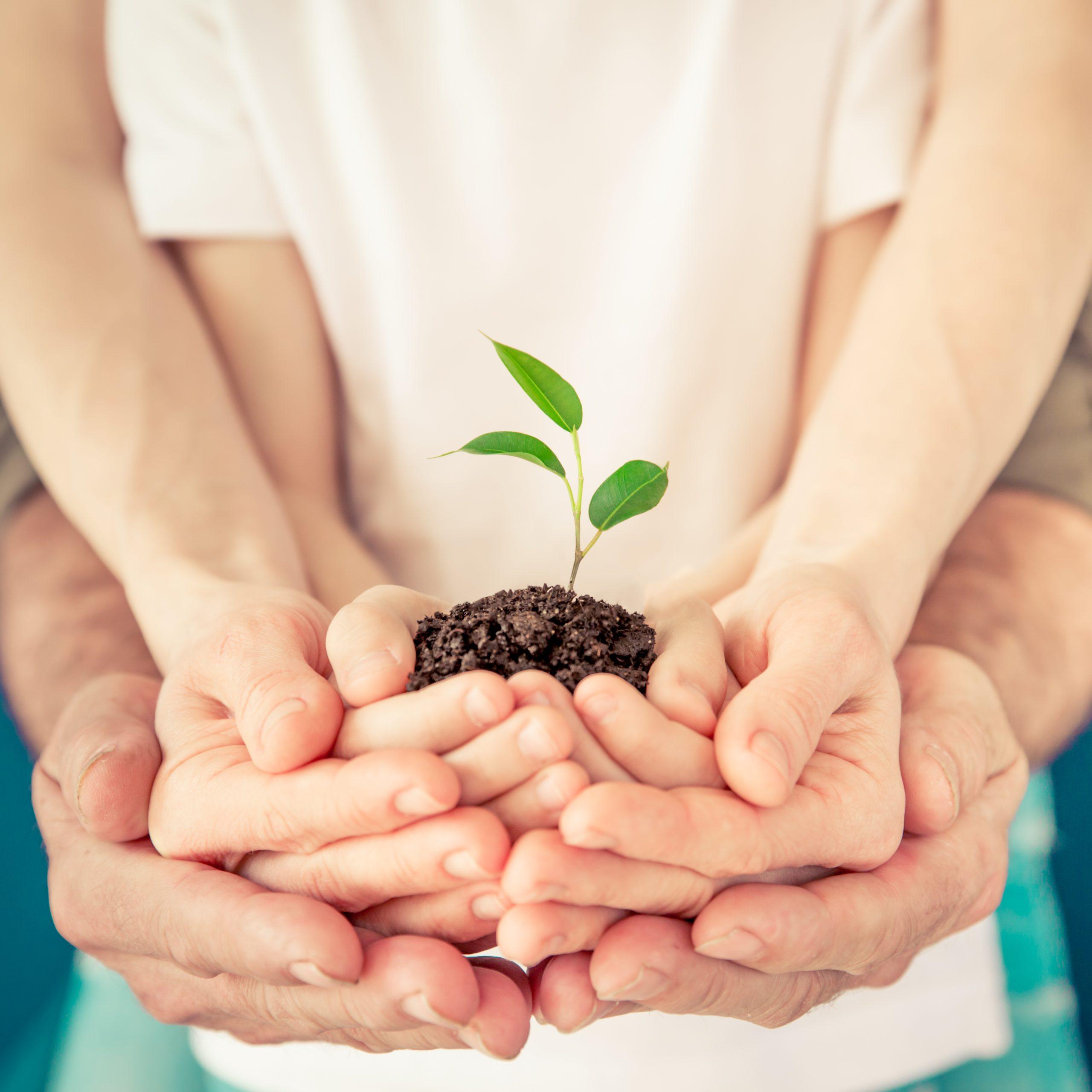 Educație ecologică pentru copii. 14 activități simple de făcut în familie